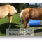 Before & After|Before & After Balanced Equine Nutrition Products