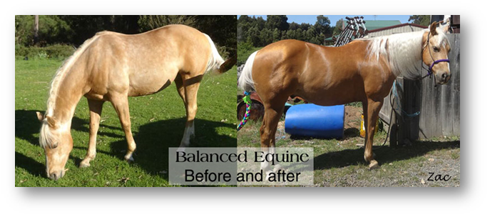 Before & After Balanced Equine Nutrition